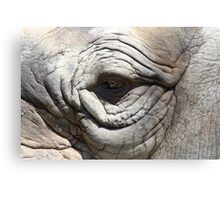rhino eye - port lympne zoo Canvas Print