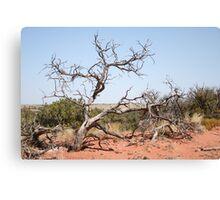 Desert tree in Utah Canvas Print