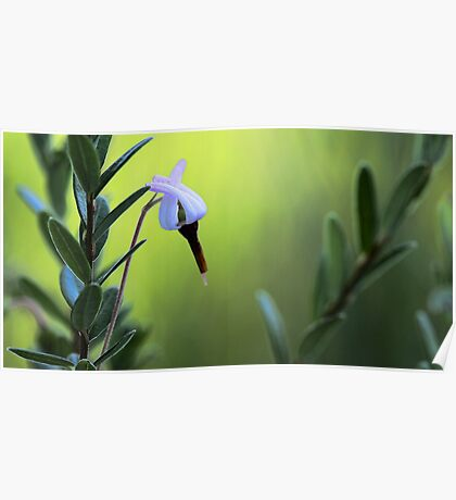 Bog Cranberry Flower - Brownfield Bog Poster