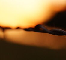 Awesome barbed wire all ablur by agenttomcat