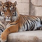 Resting Tiger by Rick Montgomery