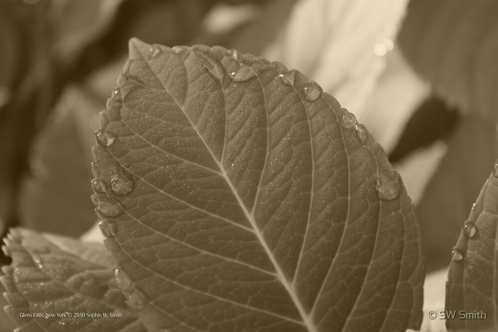 Leaf | Glens Falls, New York  by © Sophie W. Smith