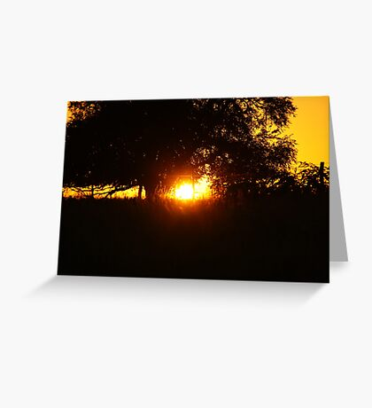 Sunlight tunneling through a tree Greeting Card