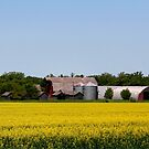 Canola Time by Larry Trupp