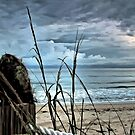 Coconut and Sea Oats by Noble Upchurch