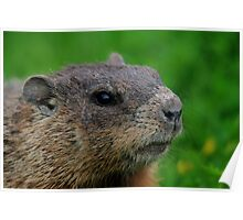Woodchuck Profile Poster