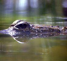 Crocodile in View by John Wallace