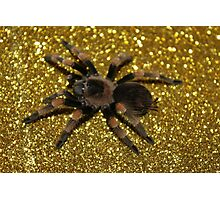 Brachypelma Smithi on Gold Photographic Print
