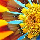 Wild Flower by JaninesWorld