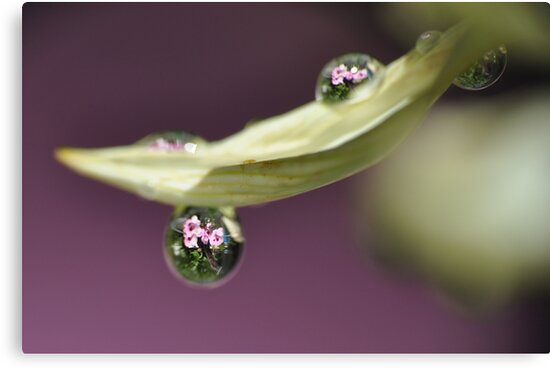 A Drop Of Nature  by Edge-of-dreams