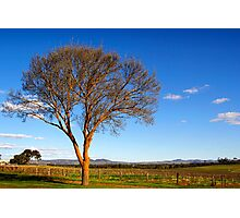 Springtime sunshine in the Barossa Valley Photographic Print