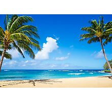 Coconut Palm tree on the beach in Hawaii, Kauai Photographic Print