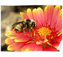 Pollen Prince Poster