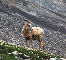 Herd member by zumi