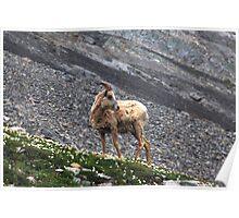 Herd member Poster