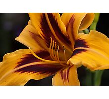 Today's Lily Photographic Print