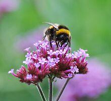 Bee Mine by Marilyn O'Loughlin