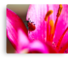 Lily Beetle Canvas Print