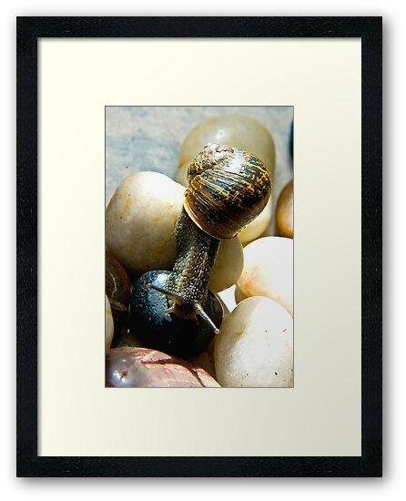 Snail #7 by Trevor Kersley