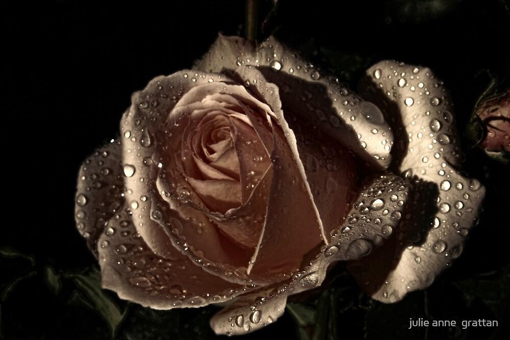 bronze rose by julie anne  grattan