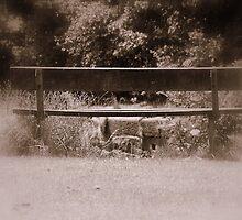 Silent Bench by Stan Owen