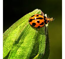 MMMM, Aphids!! Photographic Print