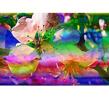 Blooms & Blossoms. Peach Cocktail. Photographic Print