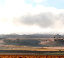 Early morning in the Barossa Valley by John Wallace