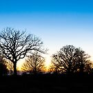 Sunset at RHS Gardens, Wisley by Graham Prentice