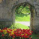 Tulips by an Archway by blueclover