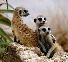 Meercat Family by Alexa Pereira