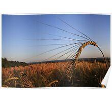 Barley Corn Poster