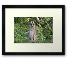 Watching Too! Framed Print