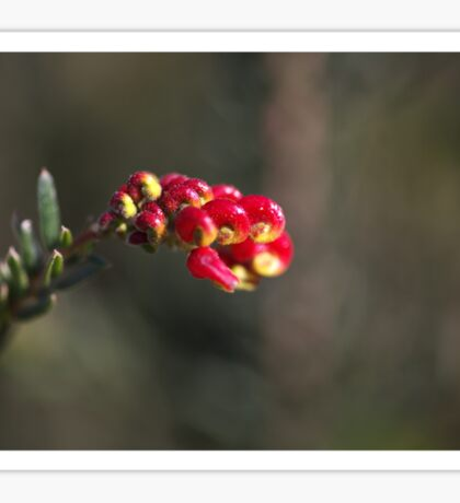 Grevillea Small Flower Sticker