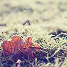 once upon a frosty morning., by subtitulo
