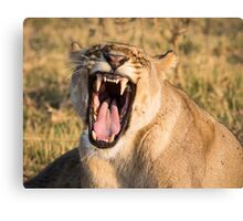 Lioness Bares Her Teeth Canvas Print