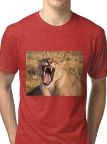 Lioness Bares Her Teeth Tri-blend T-Shirt