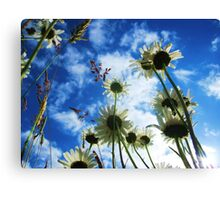 A view from the Ground Floor Canvas Print