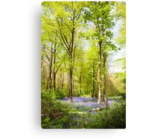 Bluebell Woods in Spring Canvas Print