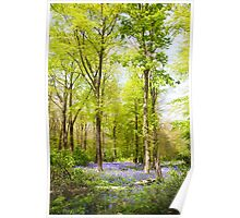 Bluebell Woods in Spring Poster