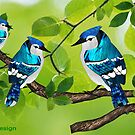 Blue jays (2372 views) by aldona