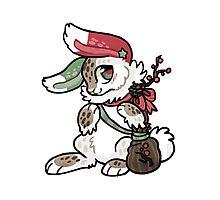 Cute Rabbit! Photographic Print