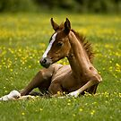 Just a little rest! by laurav