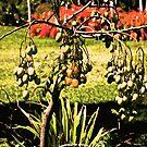 Fruit of the Forbidden Tree by photorolandi
