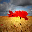 THE DANCE OF THE POPPIES by leonie7