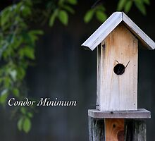 Condor Minimum by JpPhotos