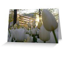 City Tulips Greeting Card