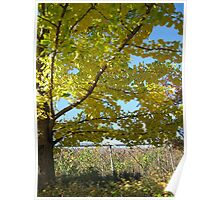 Early Autumn Tree Poster
