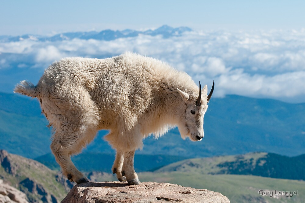 Atop Mt. Evans by Gary Lengyel