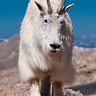 Mama Goat by Gary Lengyel
